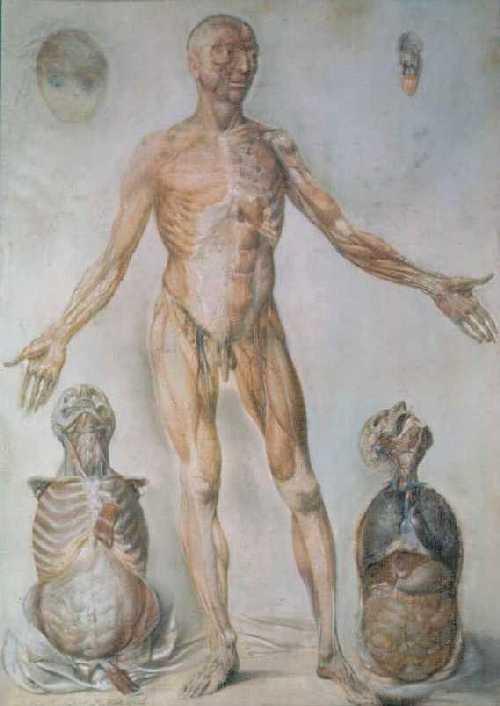 Pennsylvania Hospital History Historical Image Gallery Anatomical